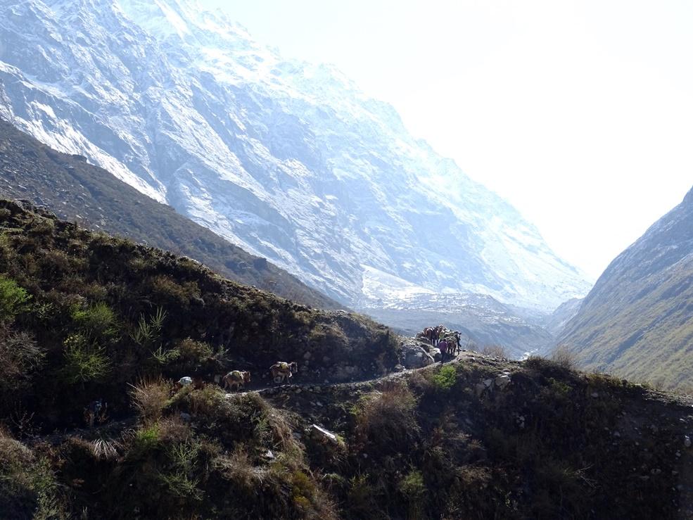 bergen Nepal