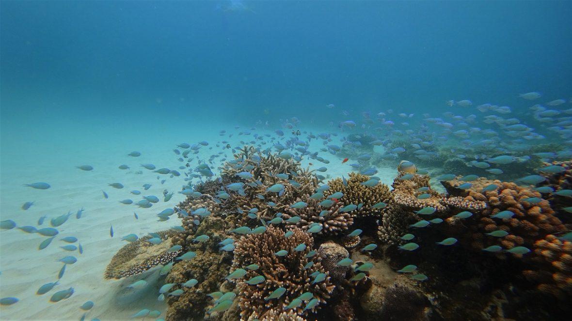 pulau weh diving
